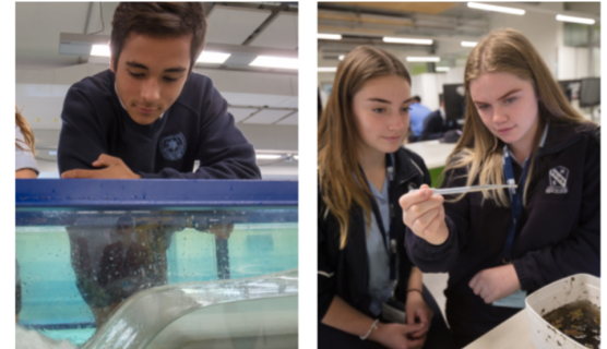 Year 10 students engage in vocation/career exploration activities